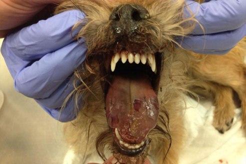 langue chien 2